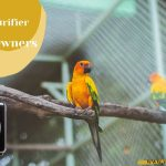 Best Air Purifier for Bird Owners in 2022- Safe for Birds Dander